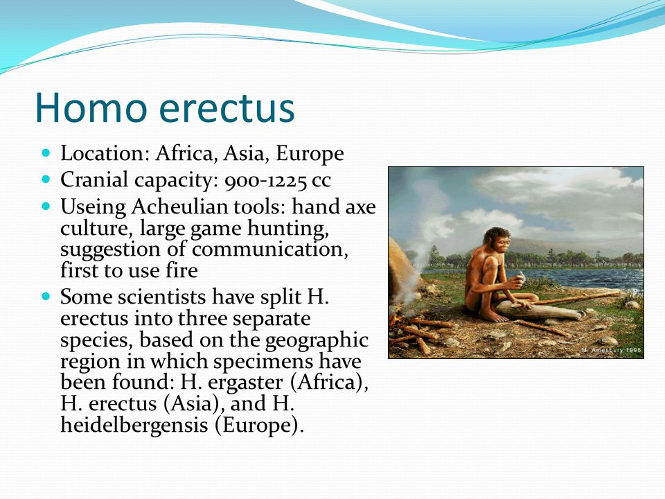 Homo erectus Location: Africa, Asia, Europe