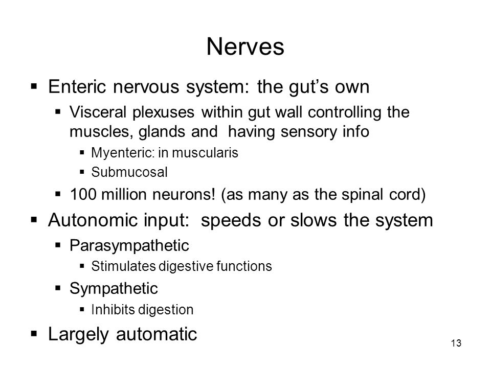 Nerves Enteric nervous system: the gut's own