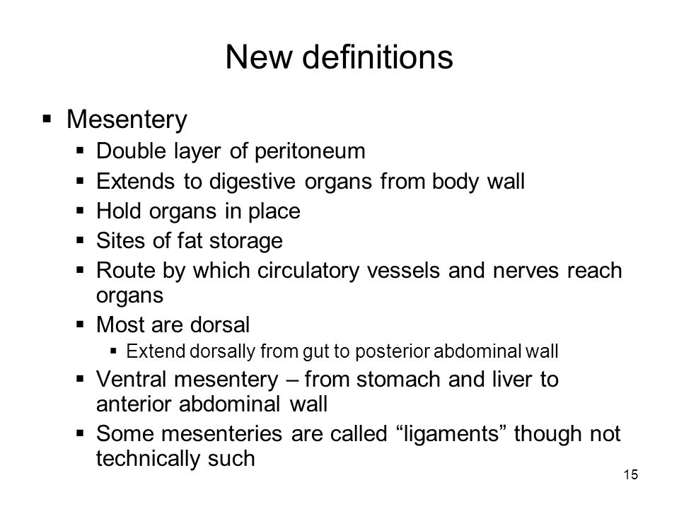New definitions Mesentery Double layer of peritoneum