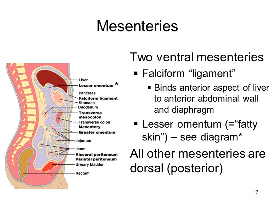 The Digestive Tract. - ppt video online download