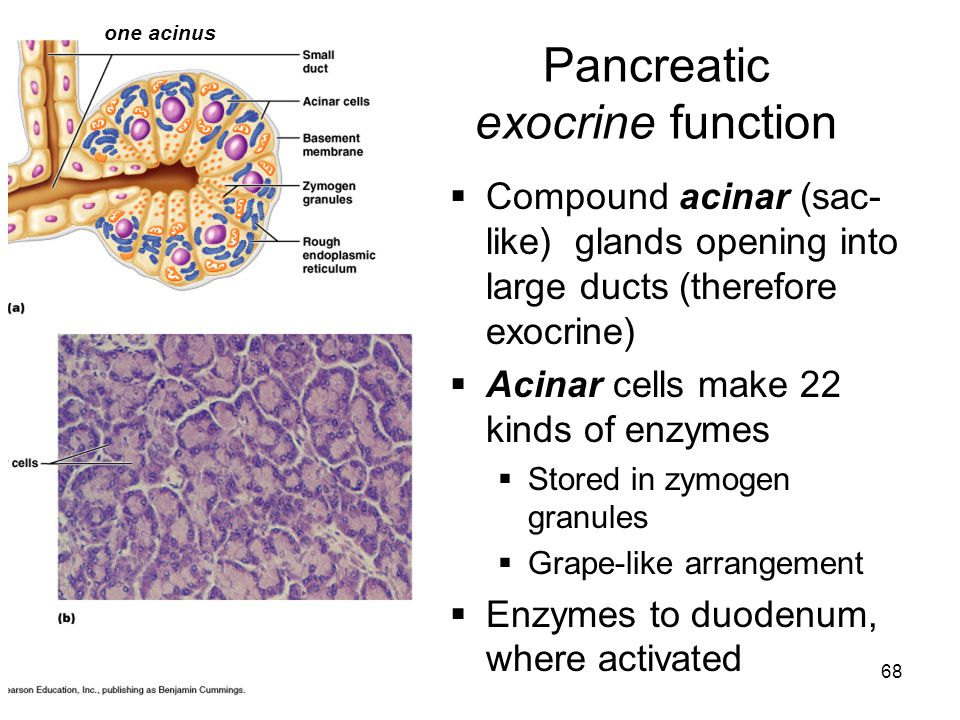 Pancreatic exocrine function
