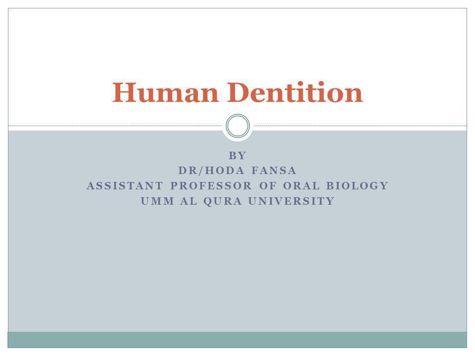 Assistant professor of Oral Biology