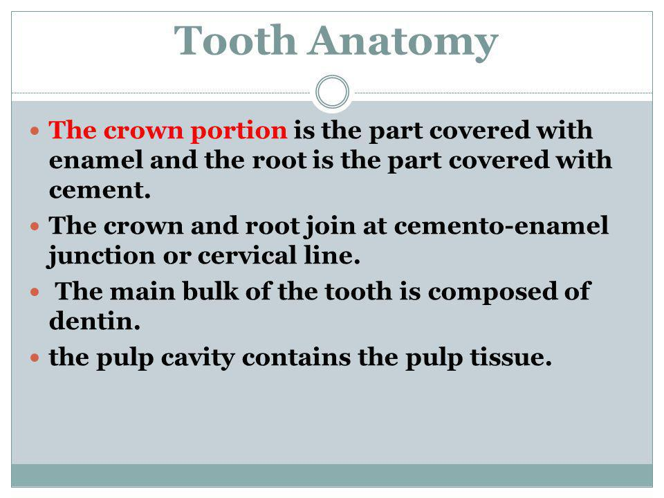 Tooth Anatomy The crown portion is the part covered with enamel and the root is the part covered with cement.