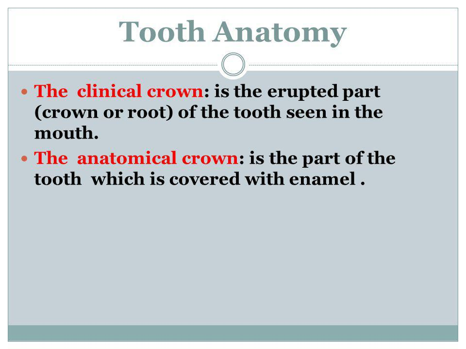 Tooth Anatomy The clinical crown: is the erupted part (crown or root) of the tooth seen in the mouth.