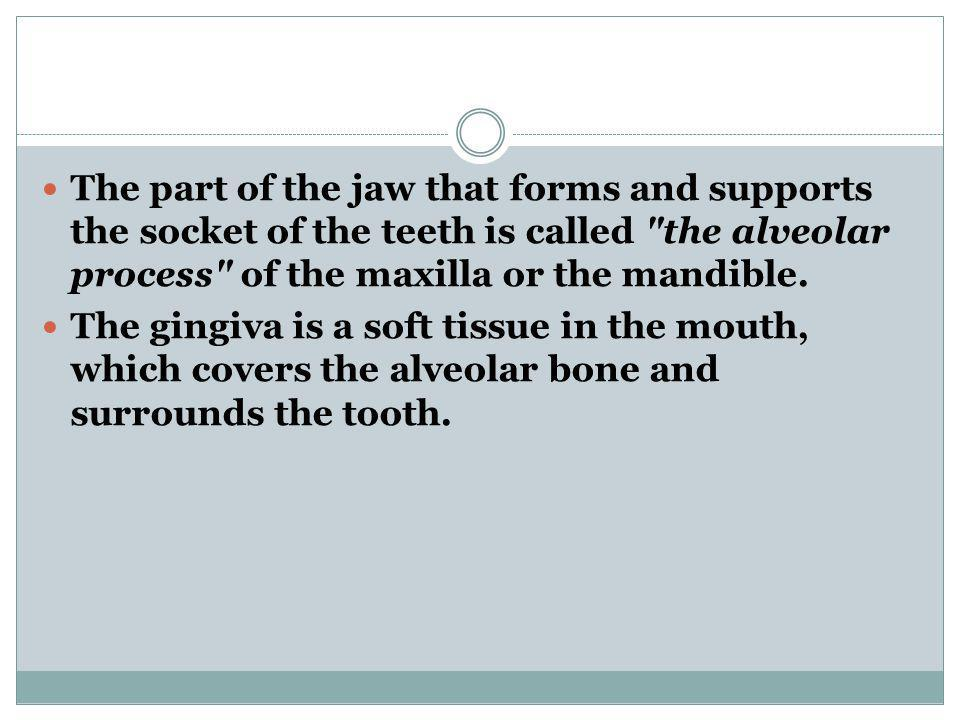 The part of the jaw that forms and supports the socket of the teeth is called the alveolar process of the maxilla or the mandible.