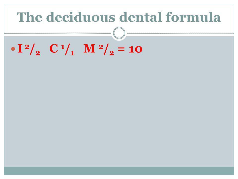 The deciduous dental formula