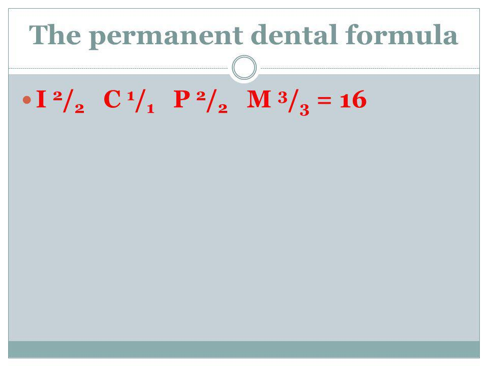 The permanent dental formula