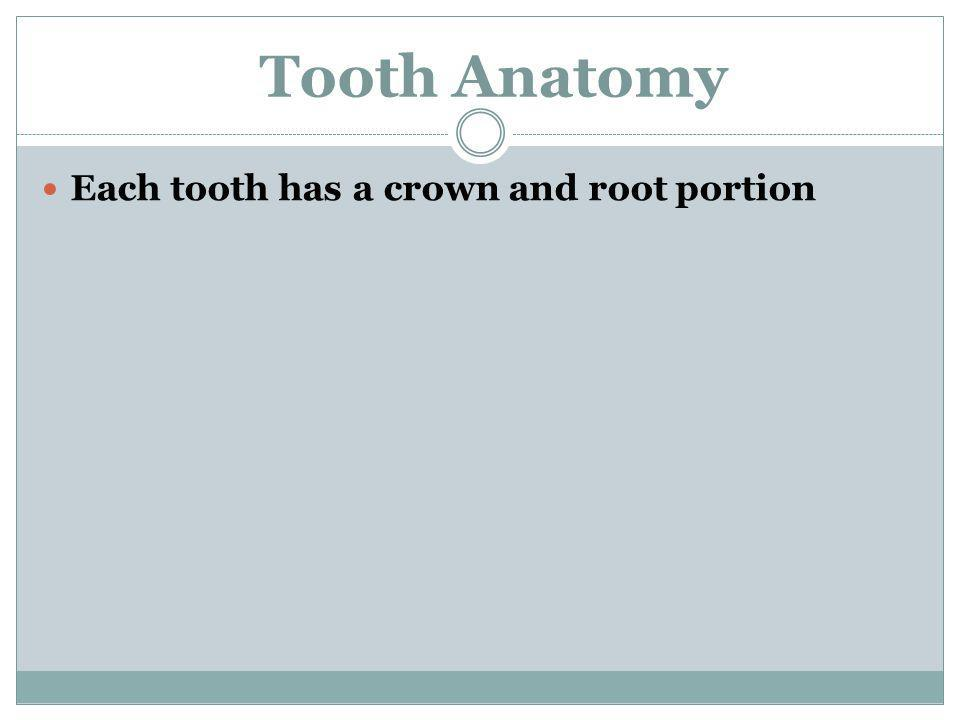 Each tooth has a crown and root portion