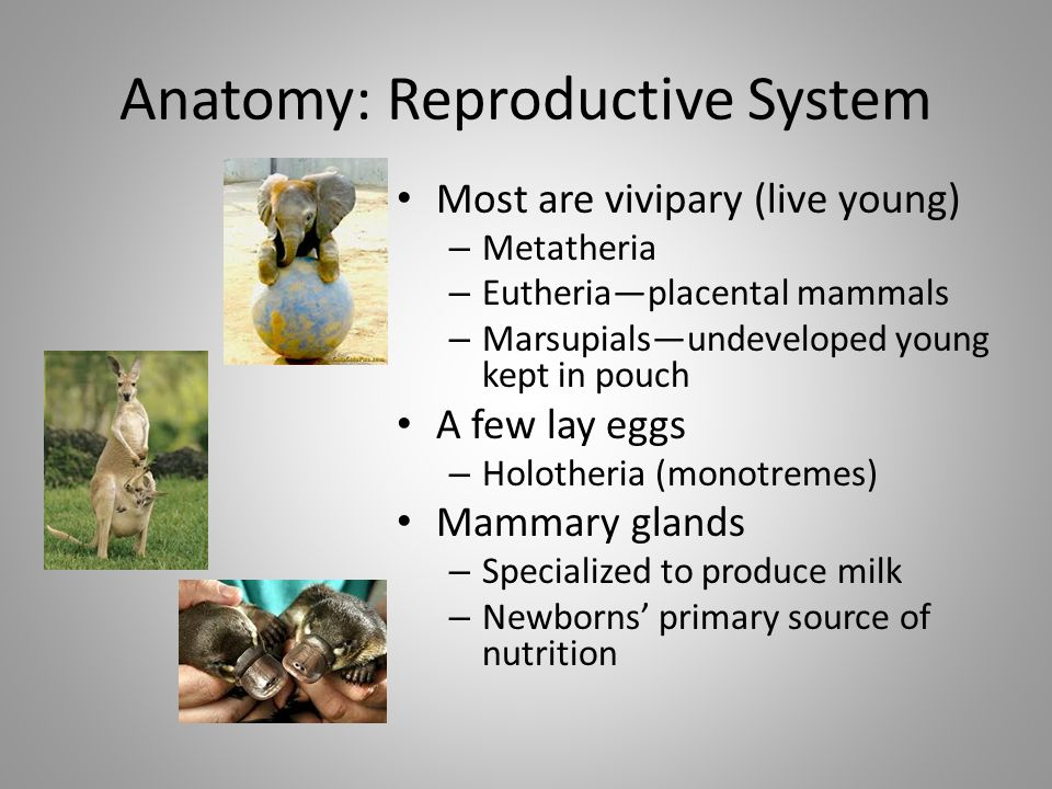 Anatomy: Reproductive System