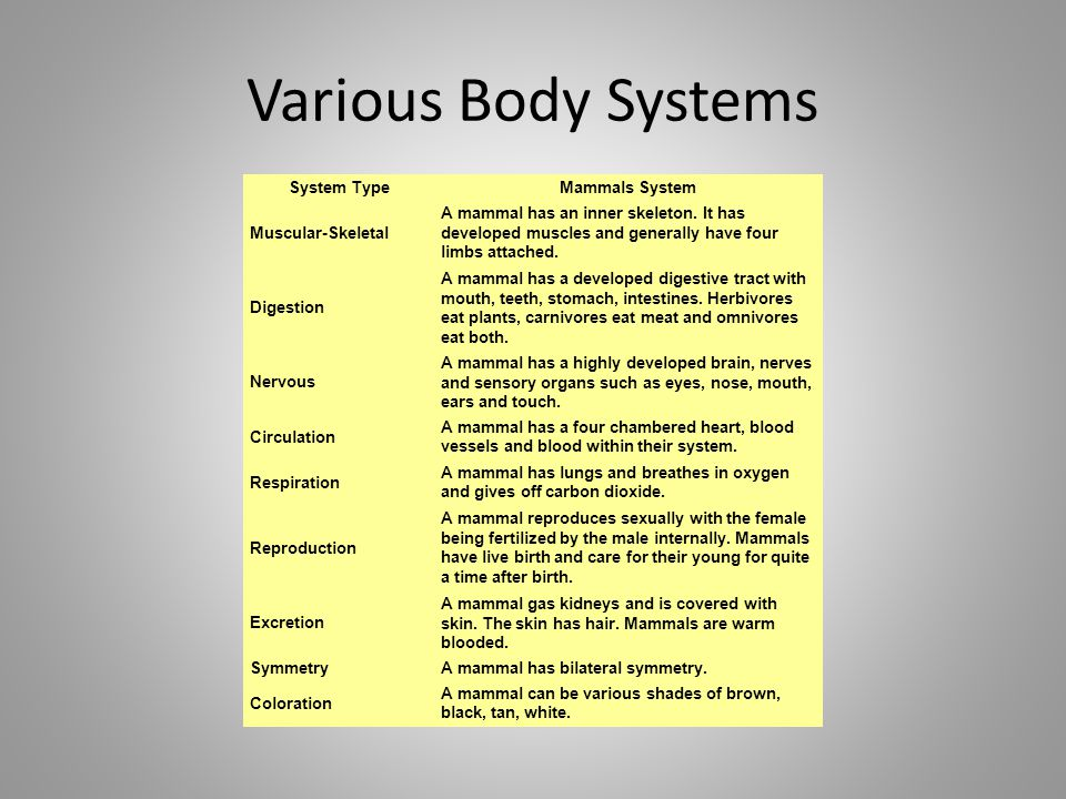 Various Body Systems System Type Mammals System Muscular-Skeletal