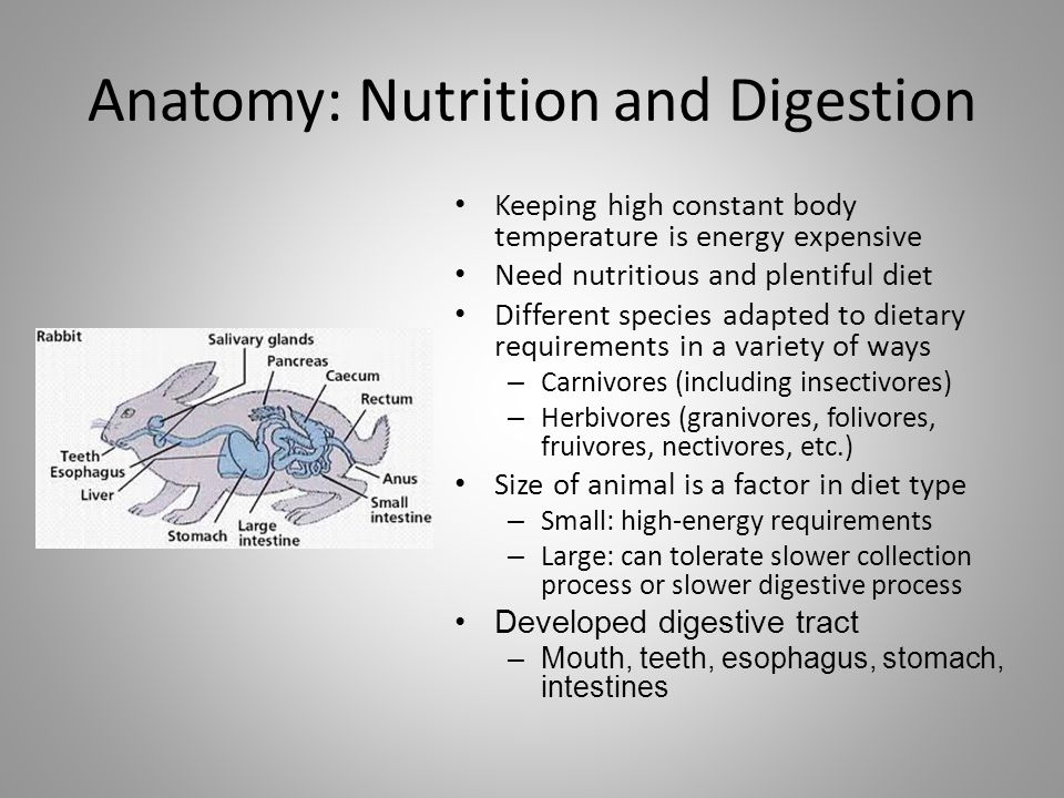 Anatomy: Nutrition and Digestion