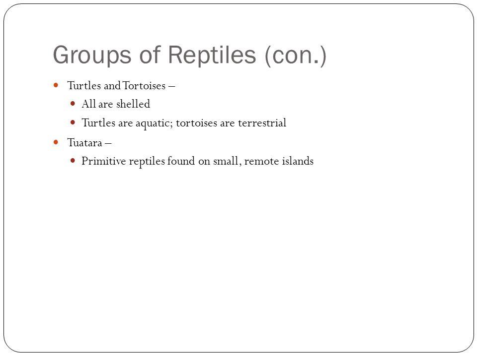 Groups of Reptiles (con.)