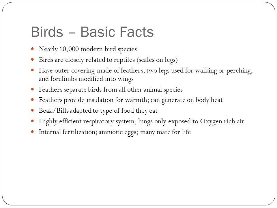 Birds – Basic Facts Nearly 10,000 modern bird species