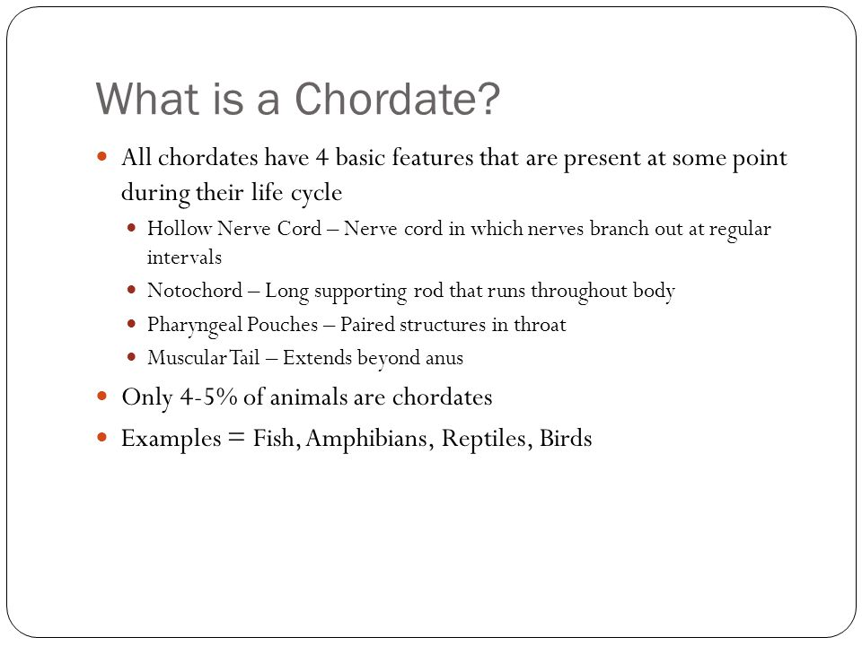 What is a Chordate All chordates have 4 basic features that are present at some point during their life cycle.