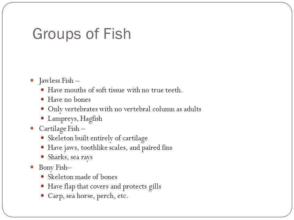 Groups of Fish Jawless Fish –
