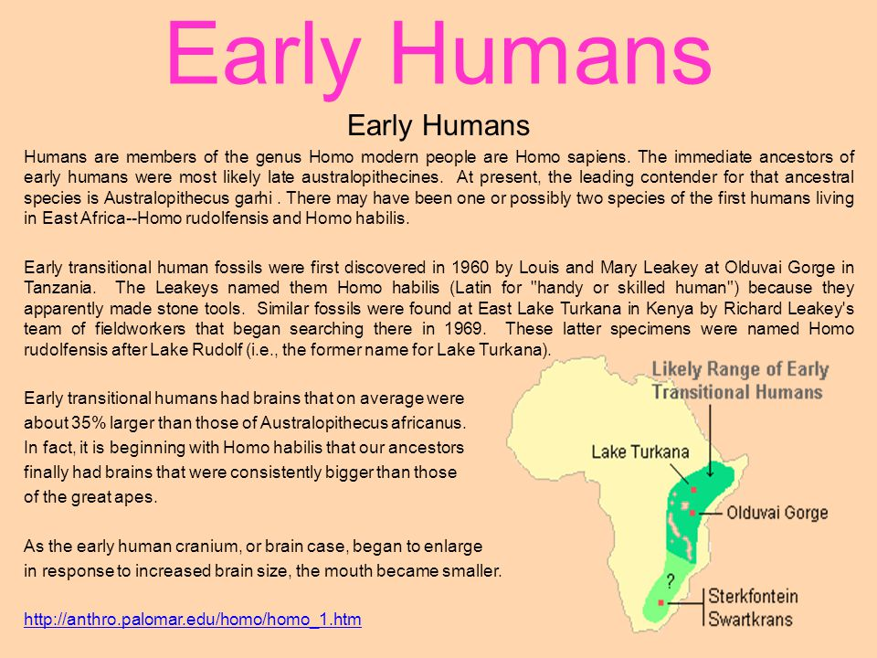 Early Humans Early Humans