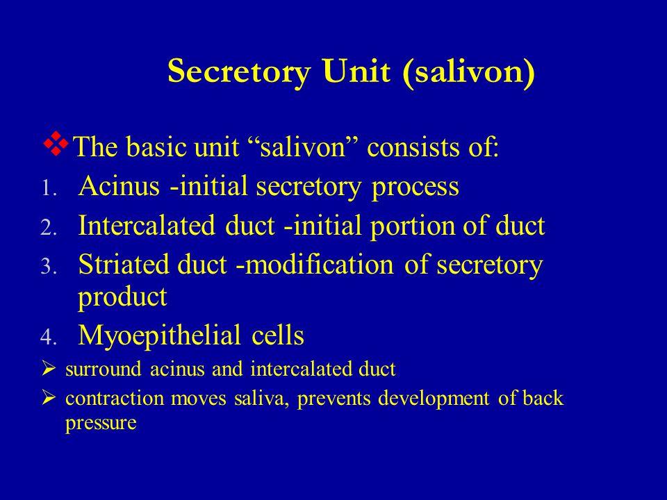 Secretory Unit (salivon)