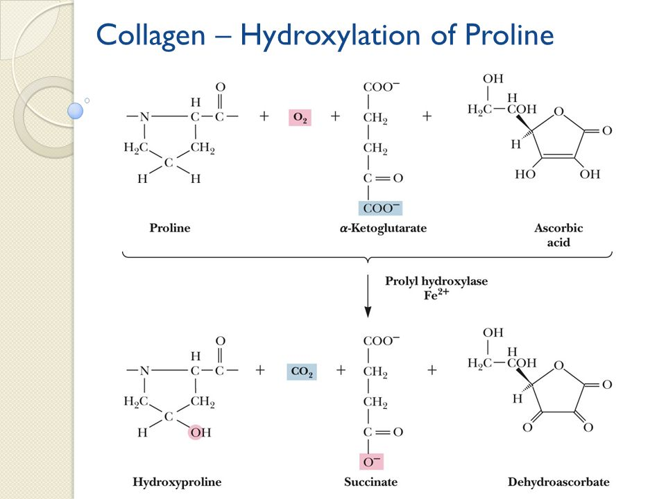 Collagen – Hydroxylation of Proline