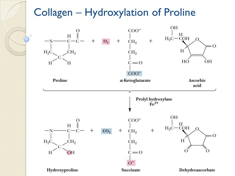 Collagen – Hydroxylation of Proline
