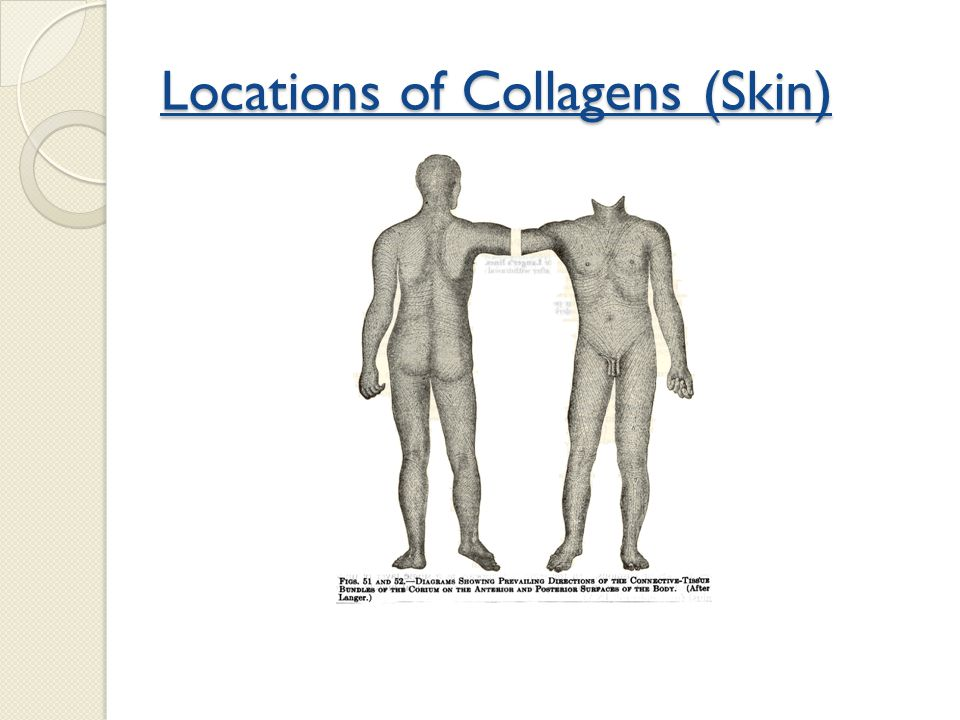 Locations of Collagens (Skin)