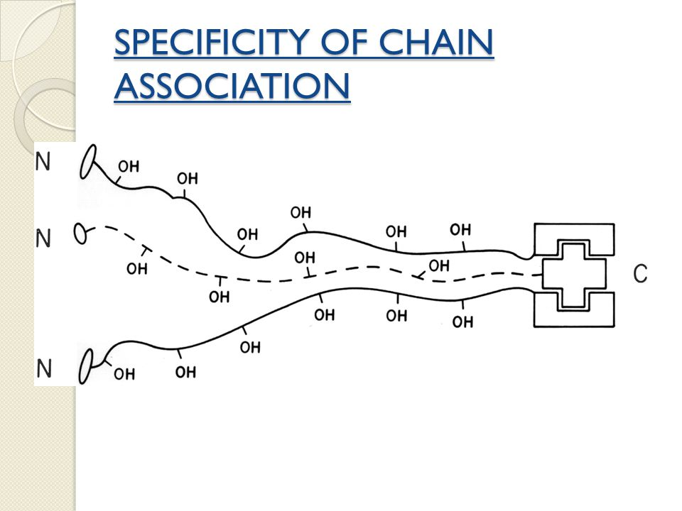 SPECIFICITY OF CHAIN ASSOCIATION