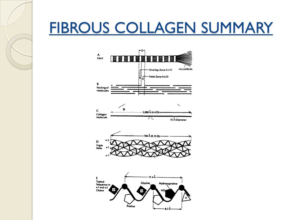 FIBROUS COLLAGEN SUMMARY