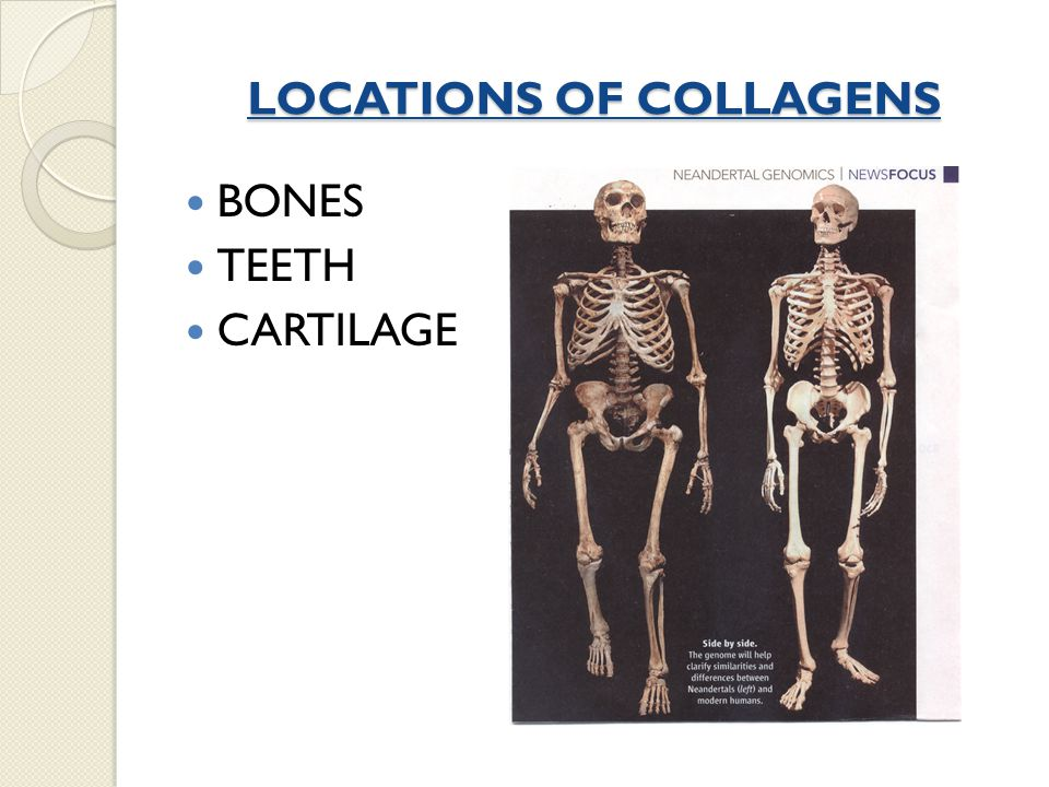 LOCATIONS OF COLLAGENS