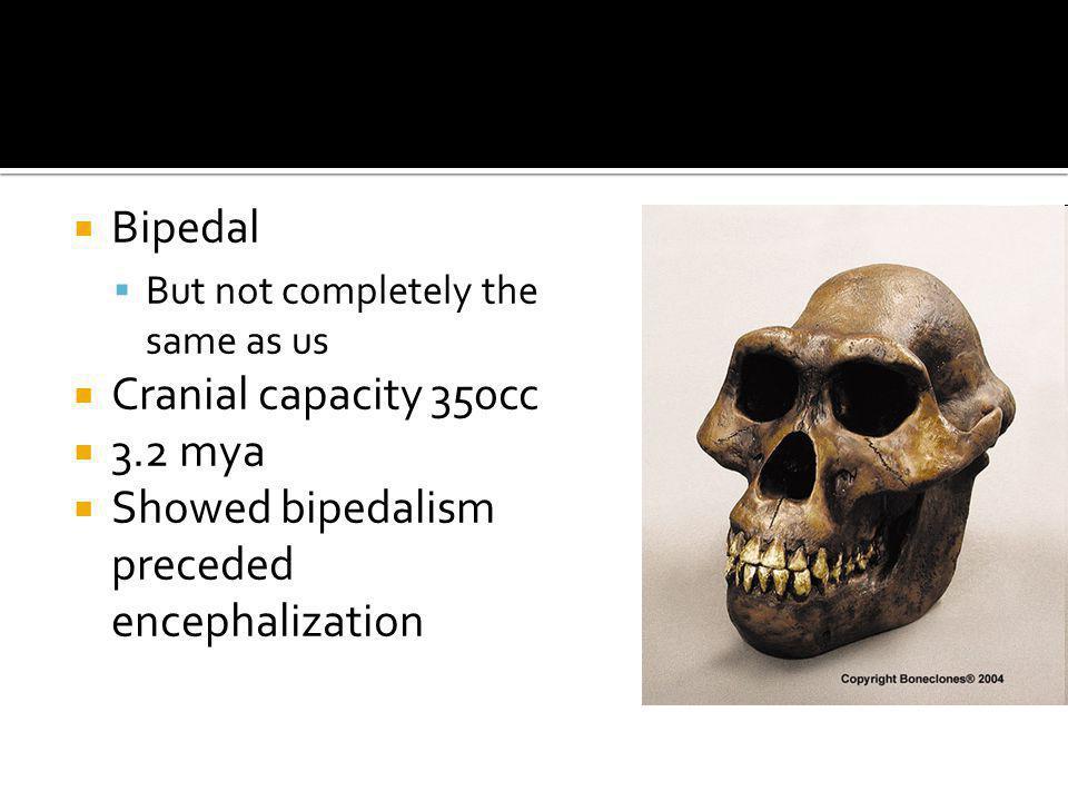 Showed bipedalism preceded encephalization