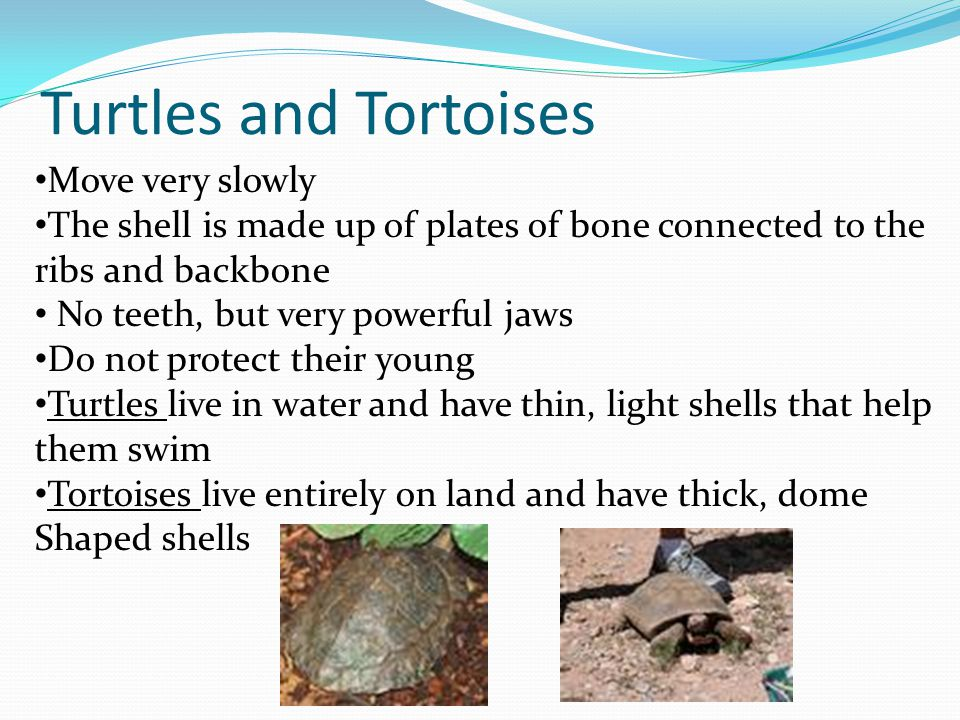 Turtles and Tortoises Move very slowly