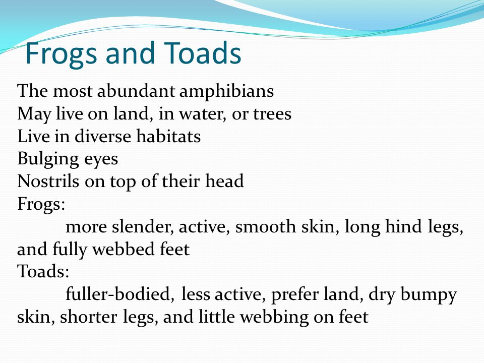 Frogs and Toads The most abundant amphibians