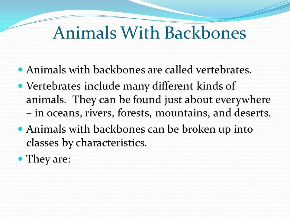 Animals With Backbones