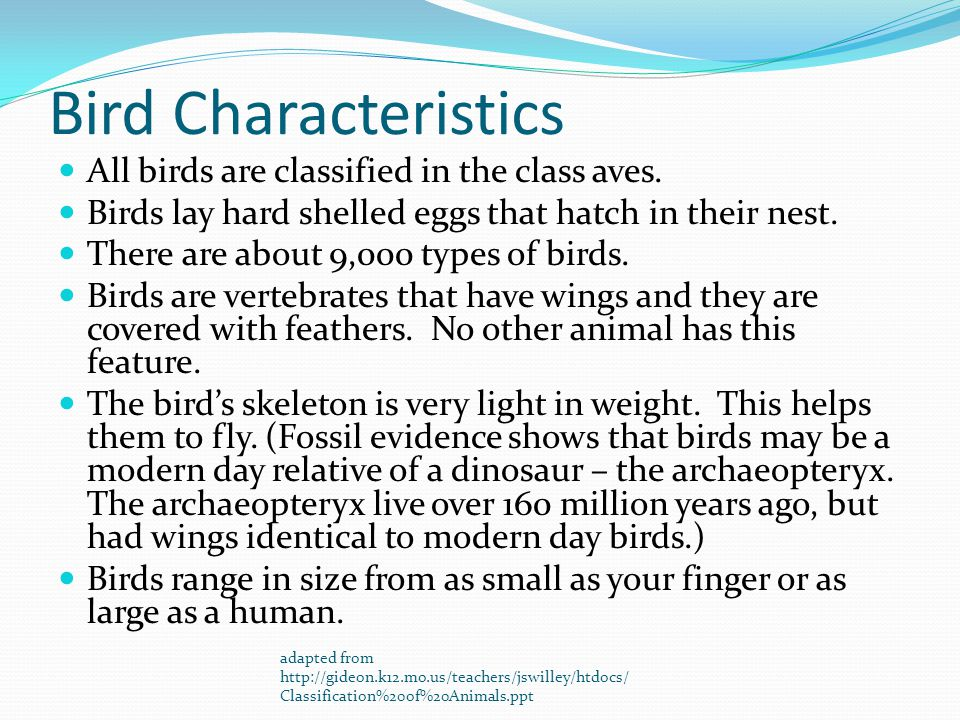 Bird Characteristics All birds are classified in the class aves.