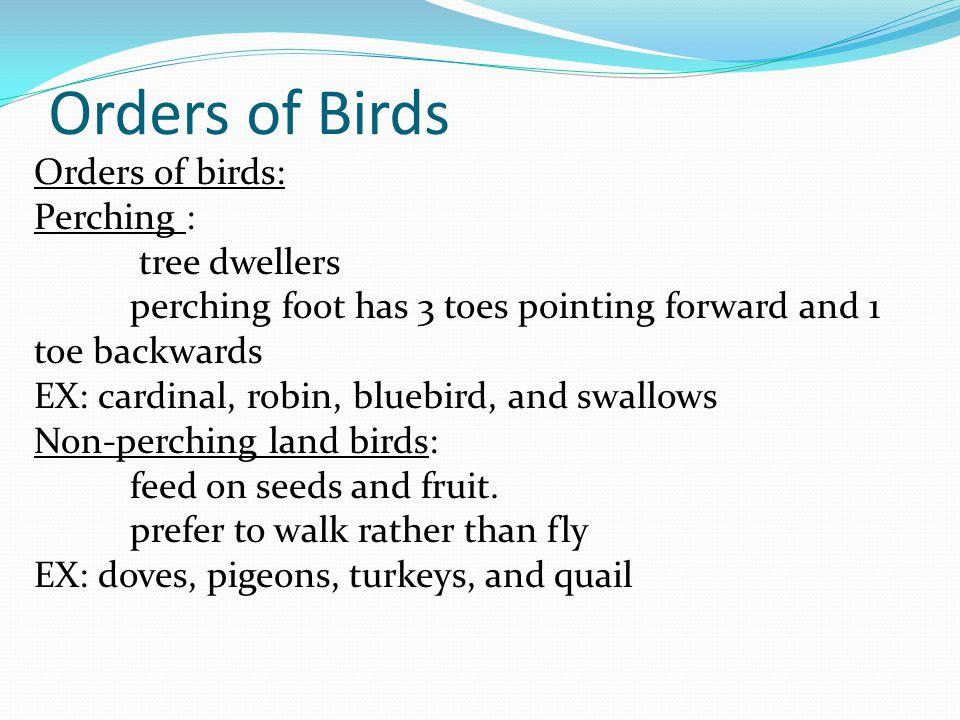 Orders of Birds Orders of birds: Perching : tree dwellers
