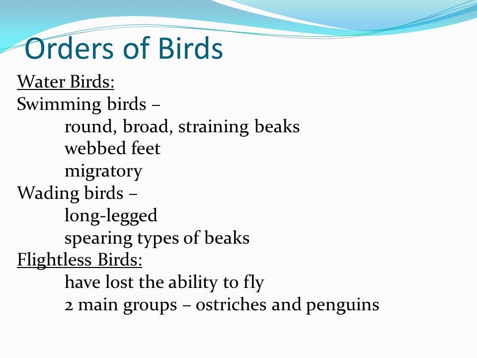 Orders of Birds Water Birds: Swimming birds –