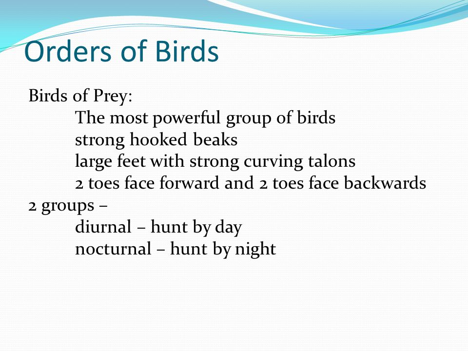 Orders of Birds Birds of Prey: The most powerful group of birds