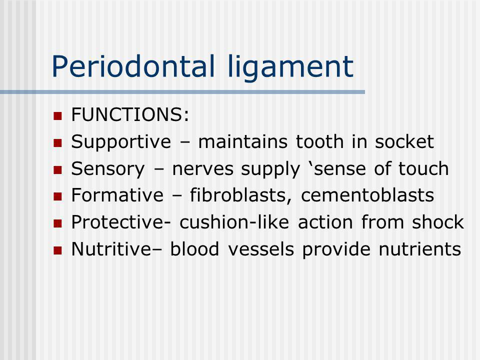 Periodontal ligament FUNCTIONS: Supportive – maintains tooth in socket