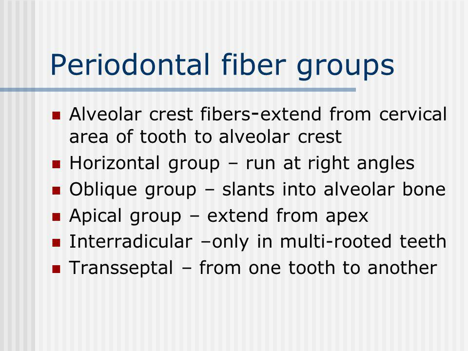 Periodontal fiber groups