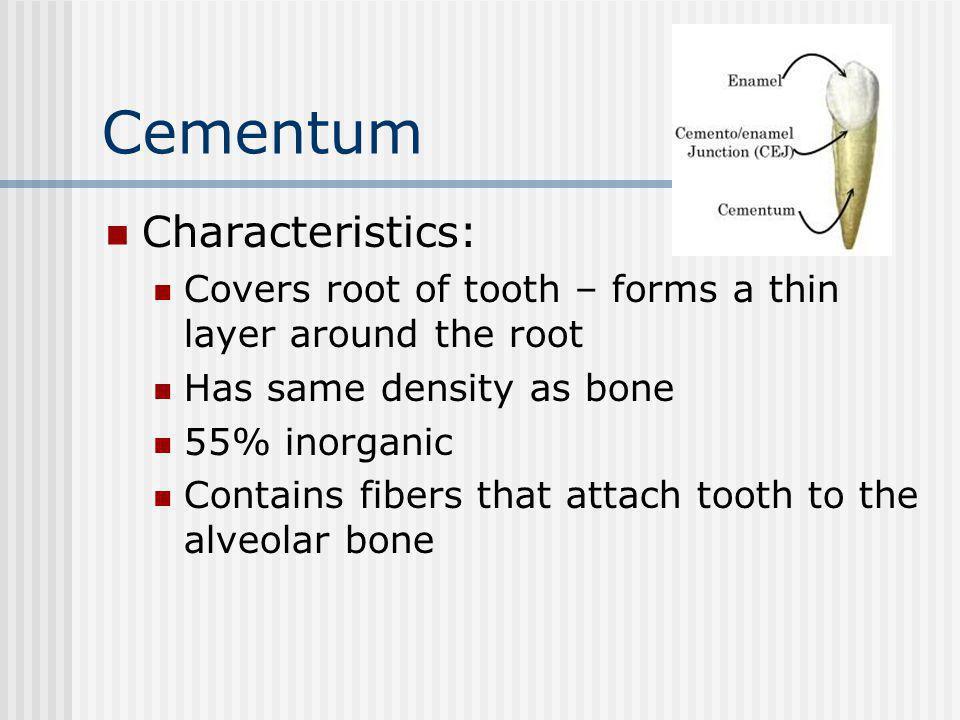 Cementum Characteristics: