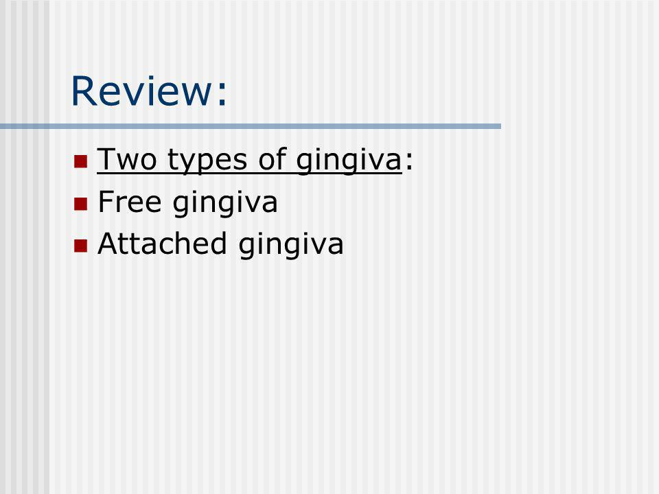 Review: Two types of gingiva: Free gingiva Attached gingiva