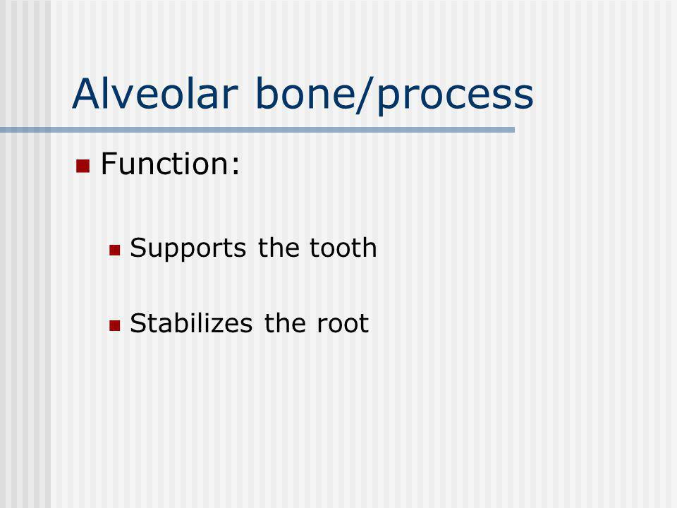 Alveolar bone/process