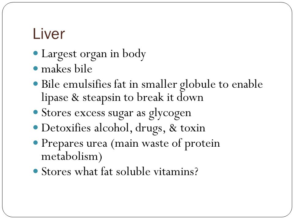 Liver Largest organ in body makes bile