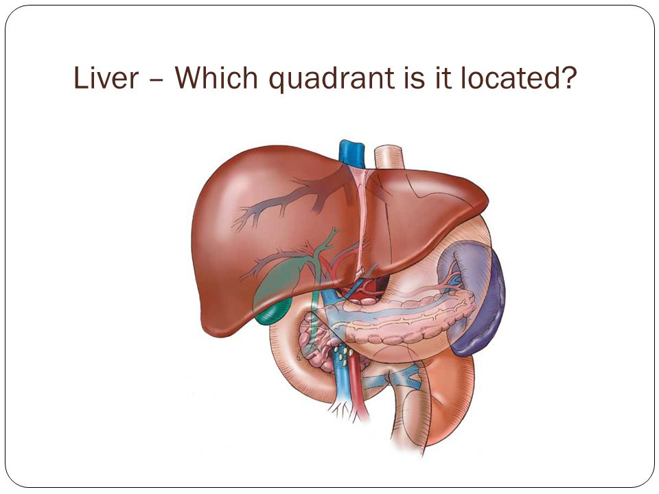 Liver – Which quadrant is it located