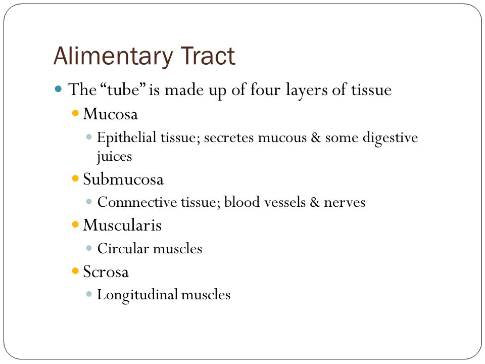 Alimentary Tract The tube is made up of four layers of tissue Mucosa