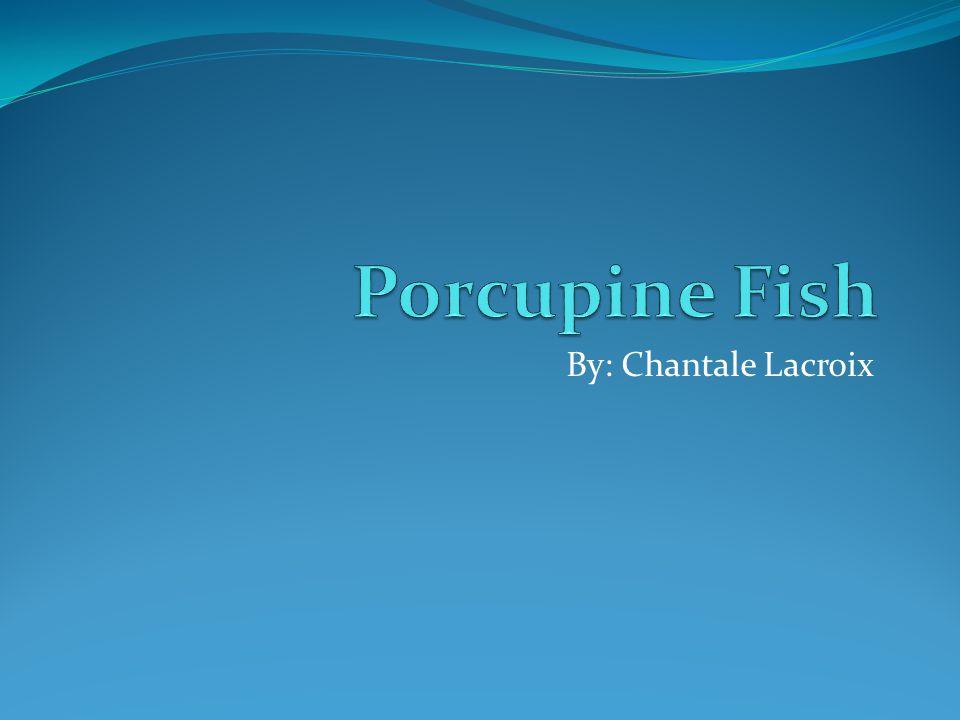 Porcupine Fish By: Chantale Lacroix