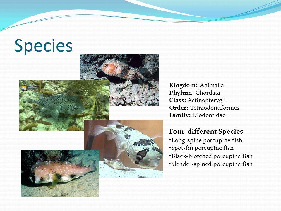 Species Four different Species •Long-spine porcupine fish