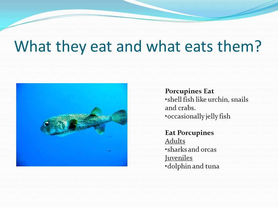 What they eat and what eats them