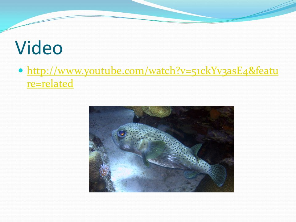 Video http://www.youtube.com/watch v=51ckYv3asE4&feature=related