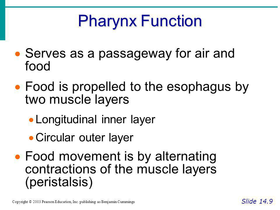 Pharynx Function Serves as a passageway for air and food