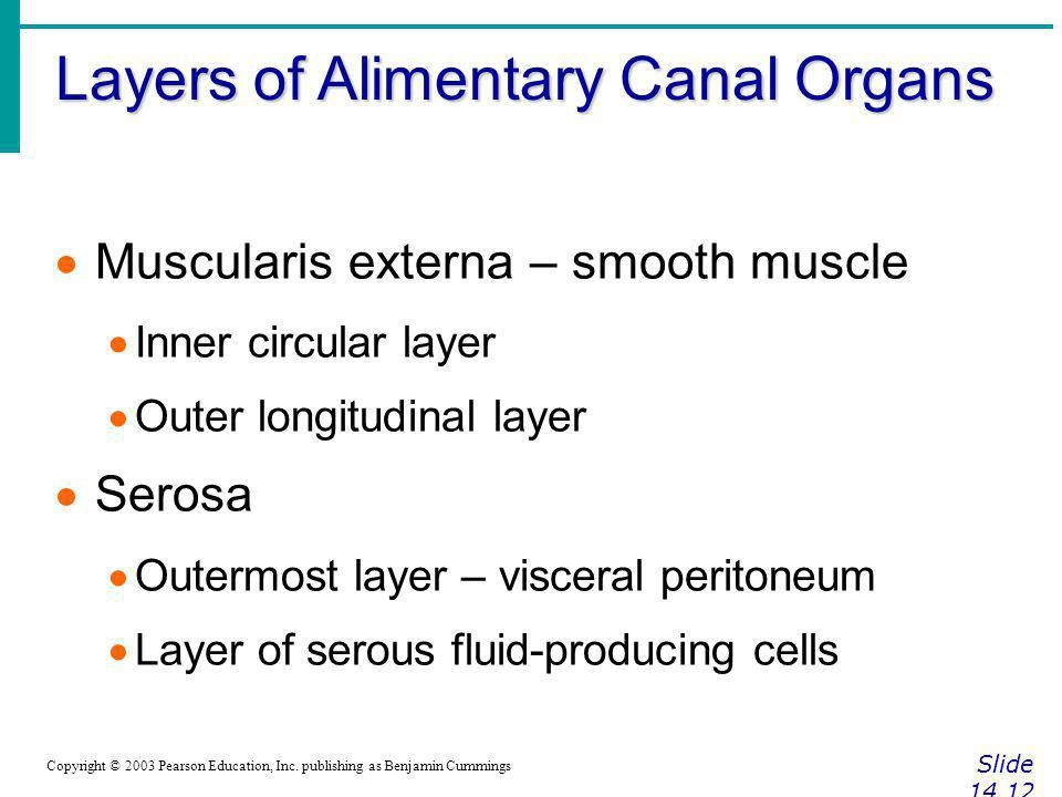 Layers of Alimentary Canal Organs