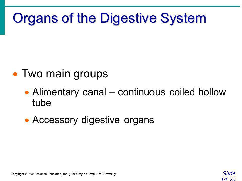 Organs of the Digestive System